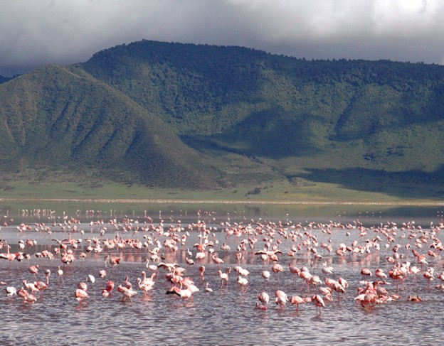 Ngorongoro_Flamingo_Lake - ngorongoro crater lodge wetu