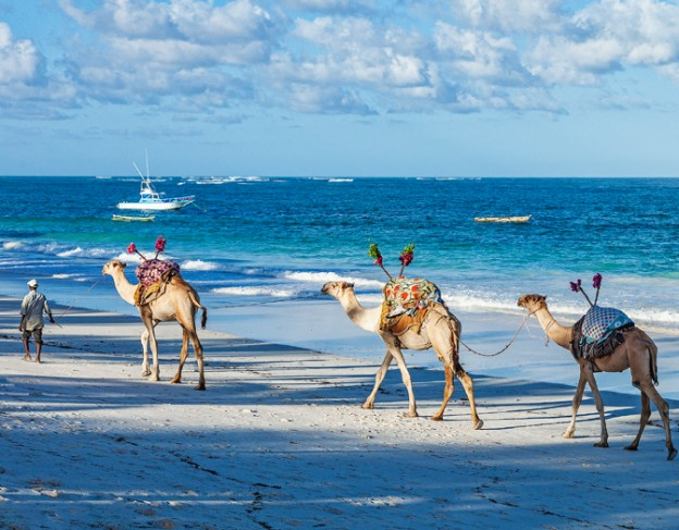 camels on the beach - location image