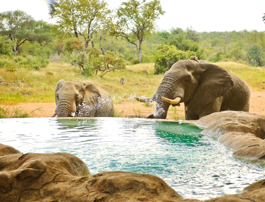 Motswari Game Lodge - hotels website