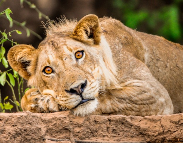 d300s_2012_nov_0277 - Royal Zambezi Lodge - wetu - small
